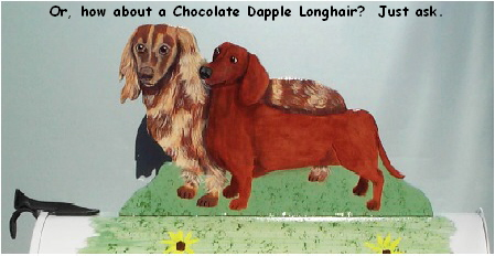 Or, how about a Chocolate Dapple Longhair?  Just ask.