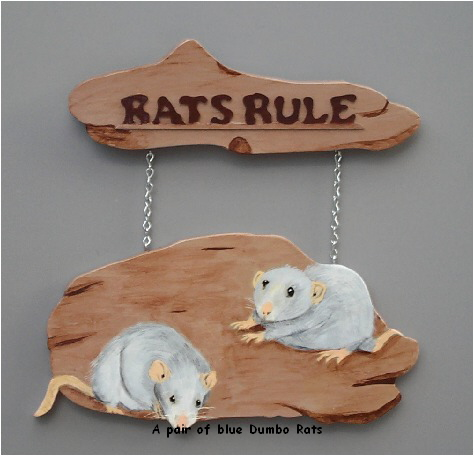 A pair of blue Dumbo Rats